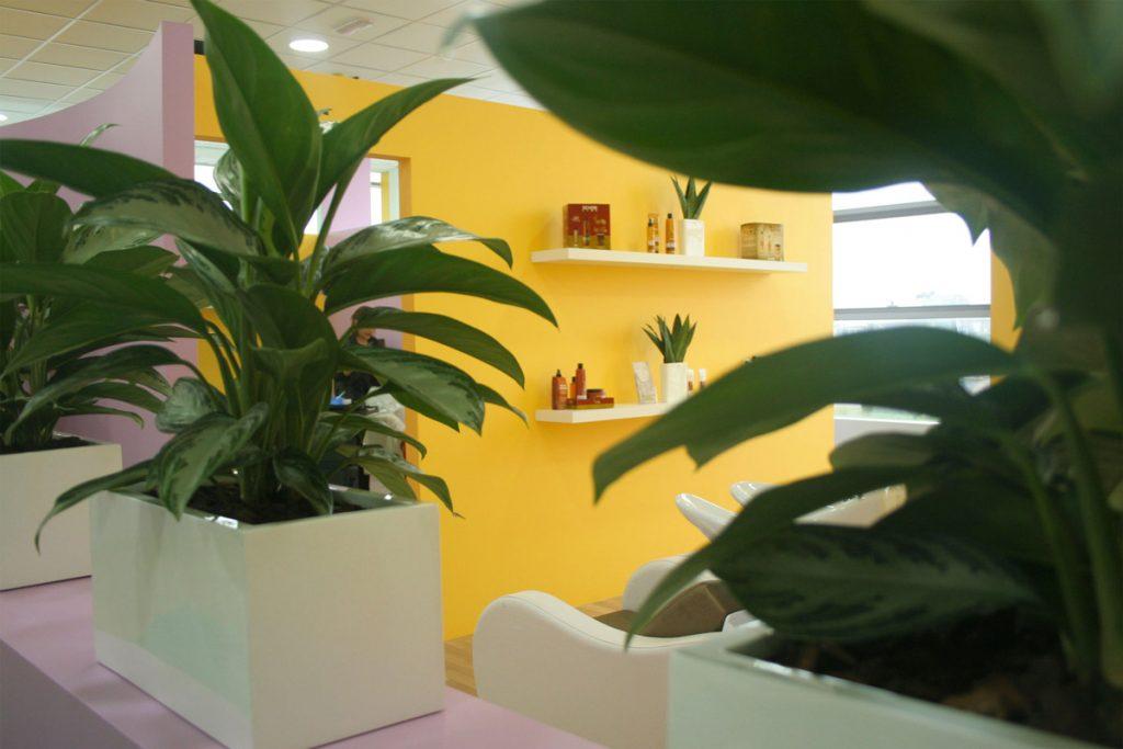 Piante con in sfondo delle pareti colorate