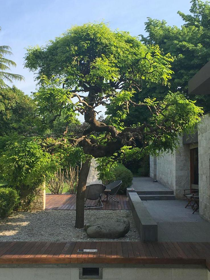 Albero all'interno di in un giardino