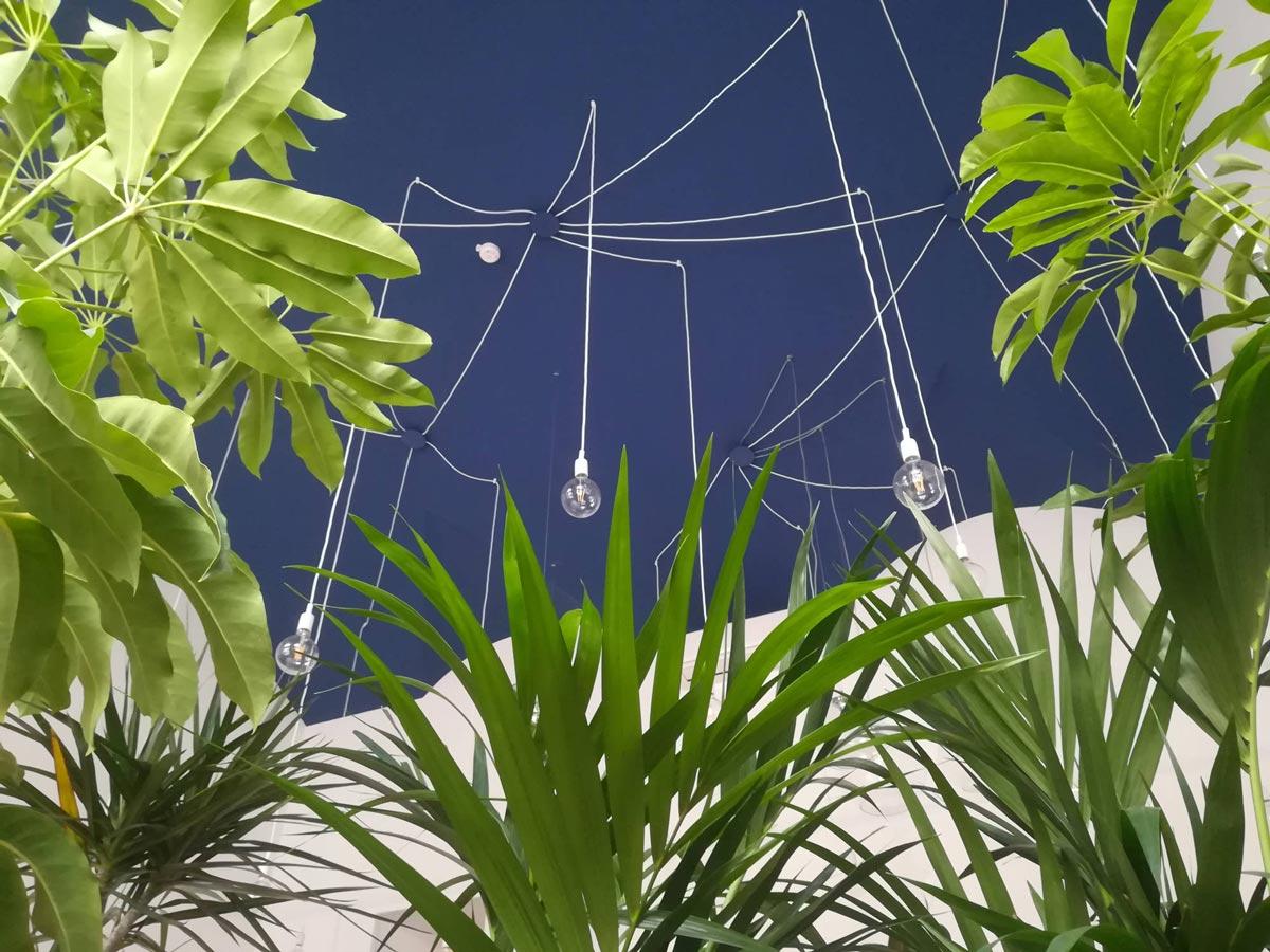 Vetrina con varietà di piante