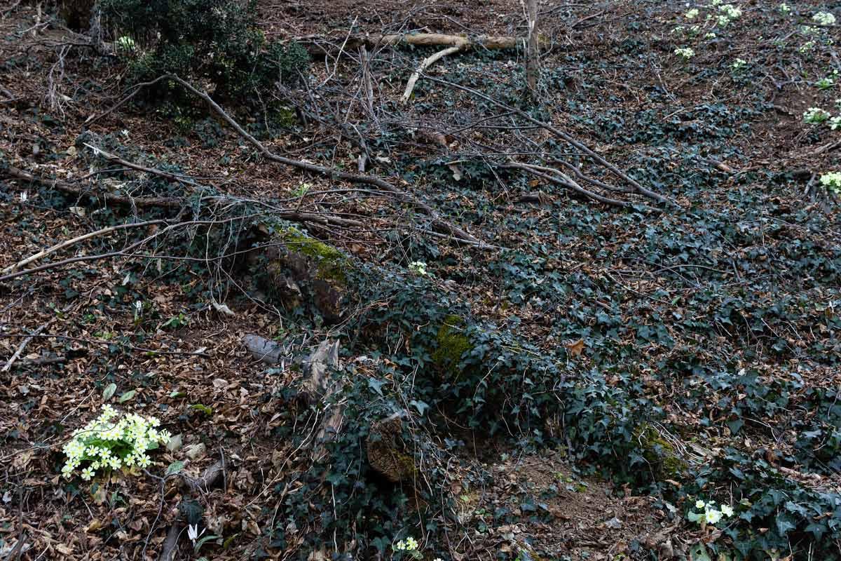 Foto di un bosco