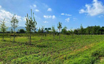 Area verde a Casteldebole